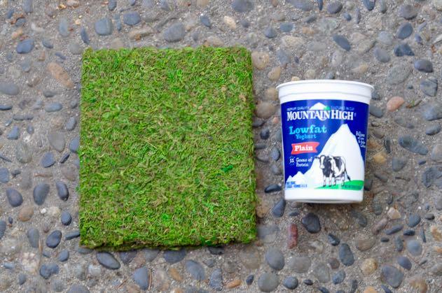 DIY Moss Planter