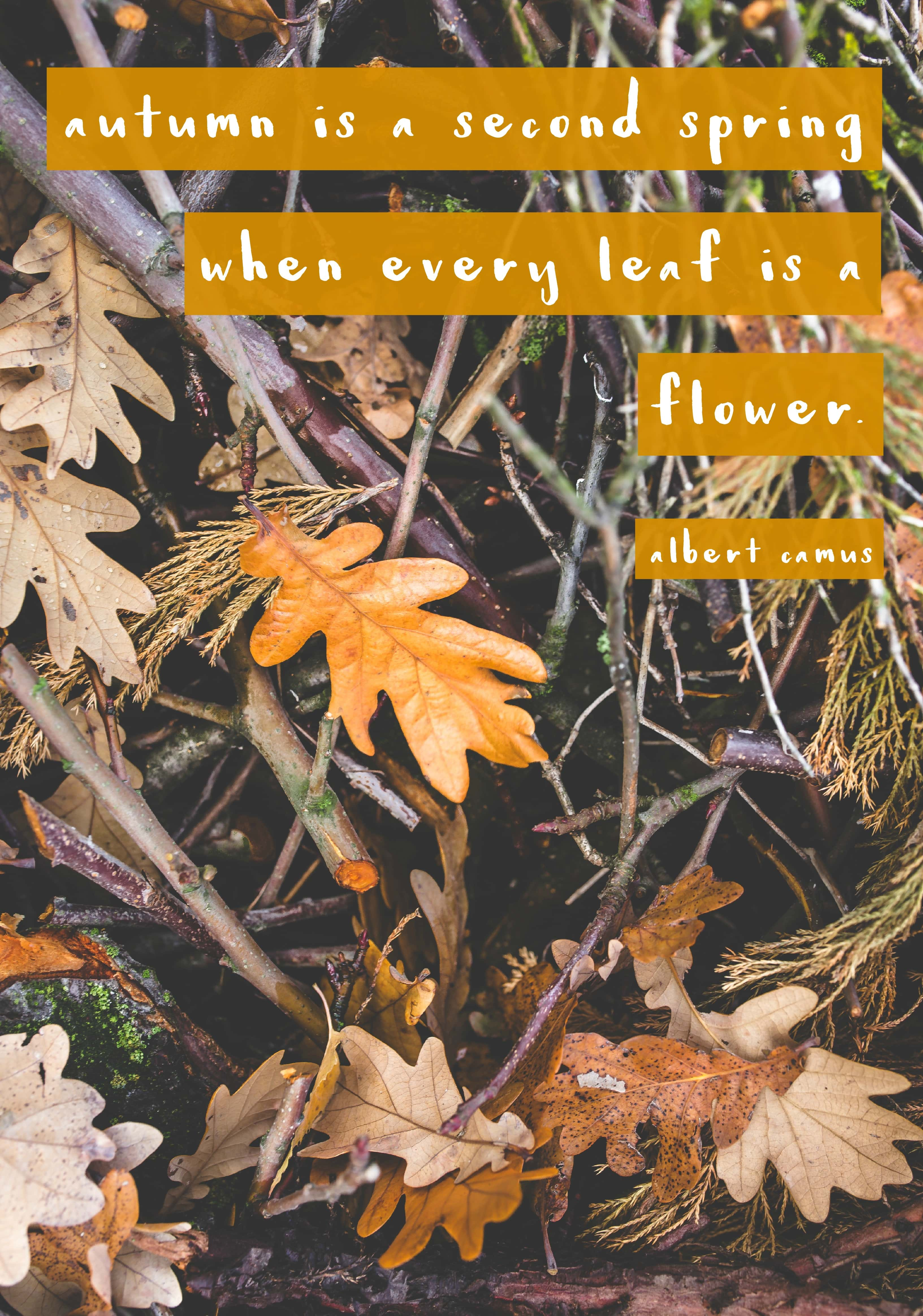 Favorite Fall Quotes - Make Life Lovely