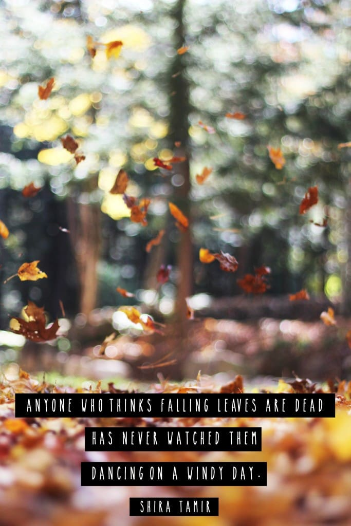 """Anyone who thinks falling leaves are dead has never watched them dancing on a windy day.""- Fall Quote"