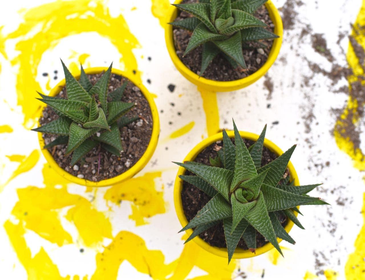 DIY pineapple planters craft