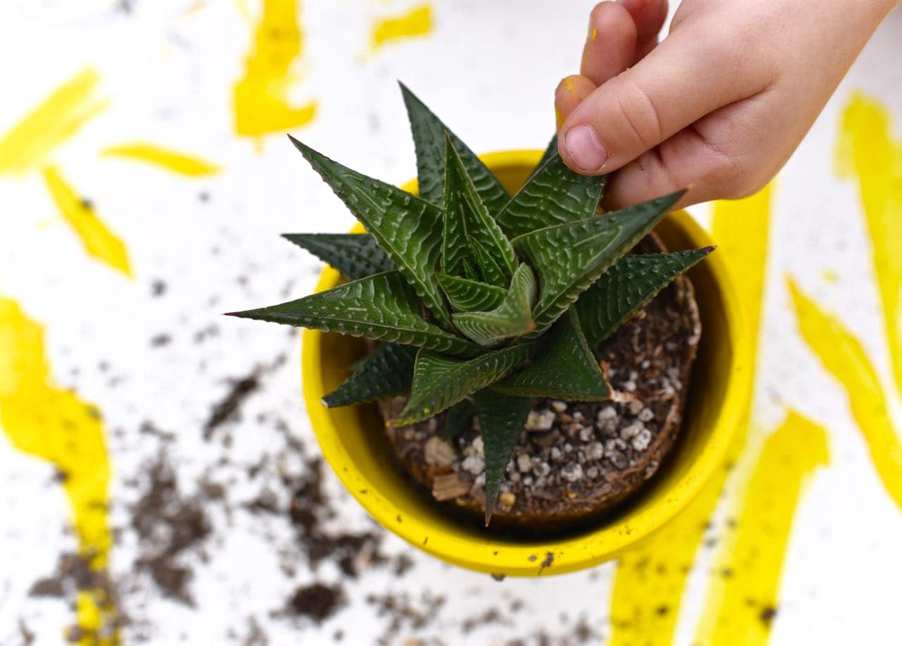 Yellow DIY pineapple planter kids craft