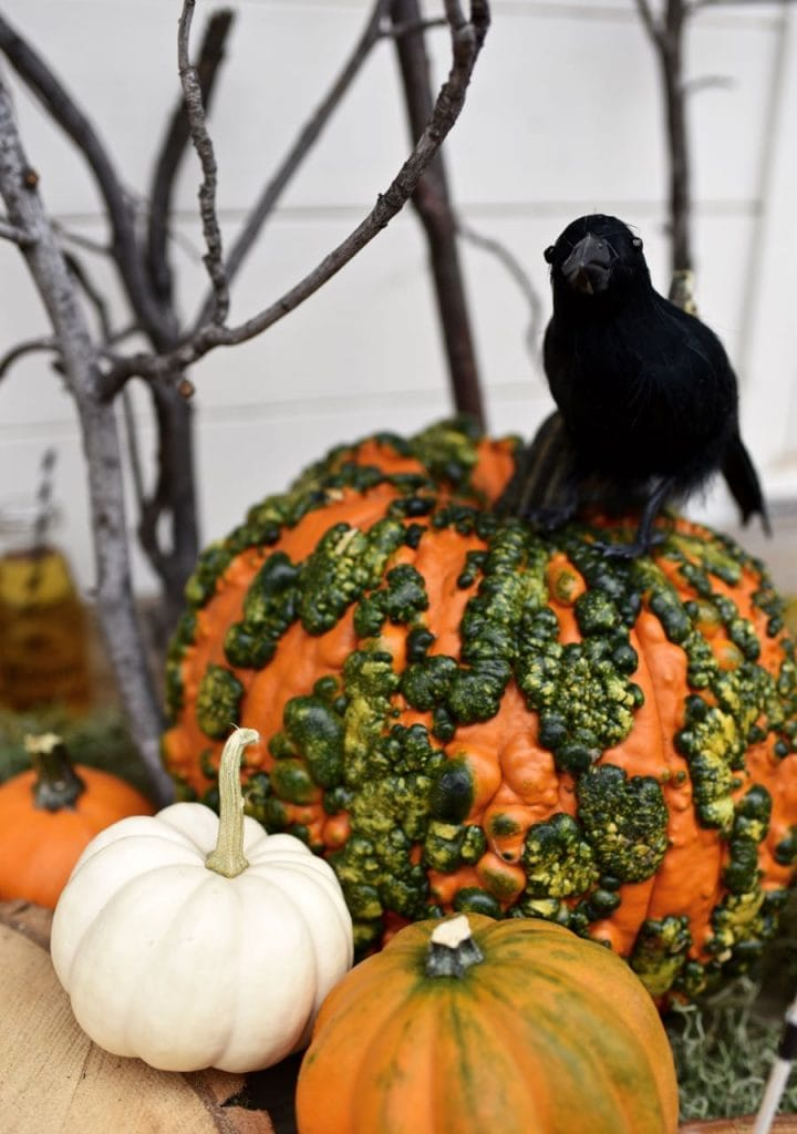 PUmpkins and raven Halloween decorations at a haunted forest Halloween party