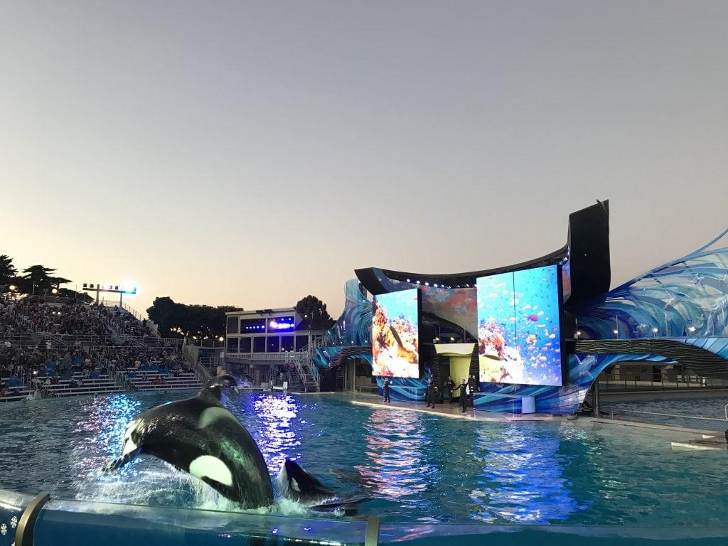 Shamu show at Sea World San Diego