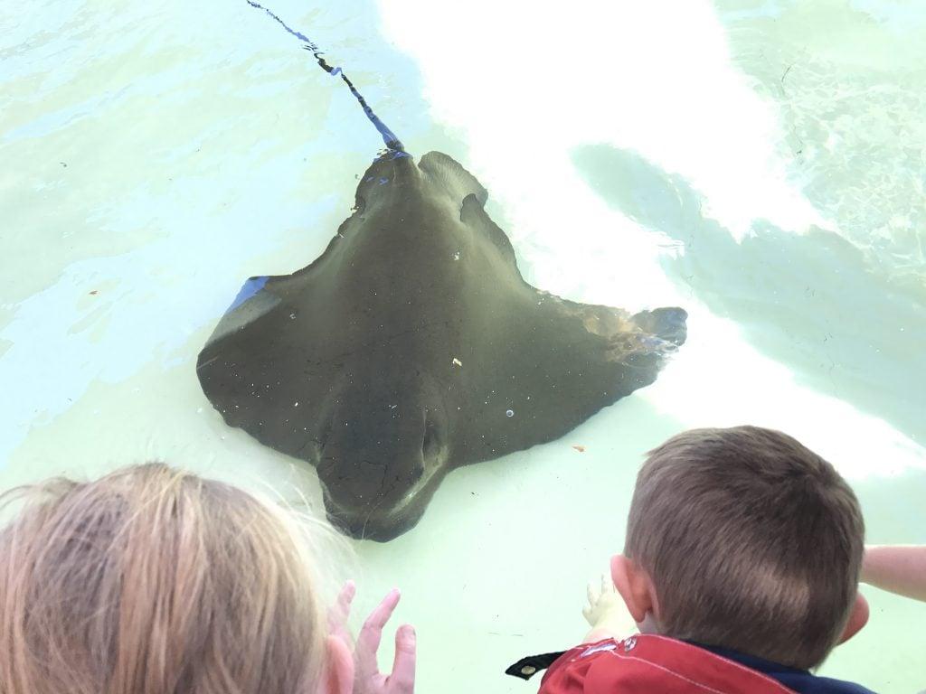 Touching rays at SeaWorld San Diego