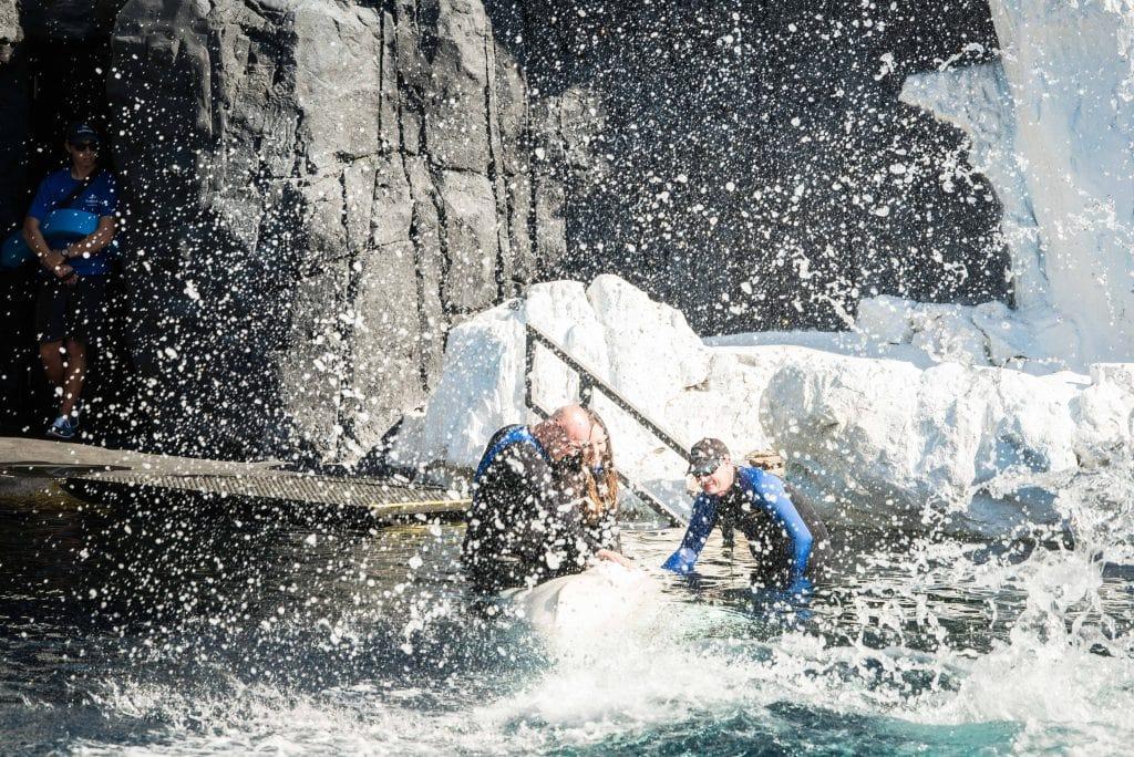 Beluga Interaction Program review SeaWorld
