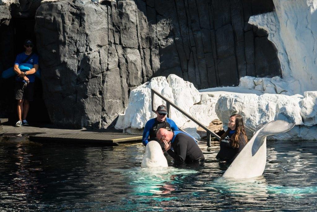SeaWorld San Diego Beluga Interaction Program