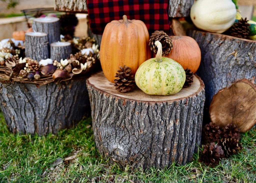 Fall picnic decorating ideas