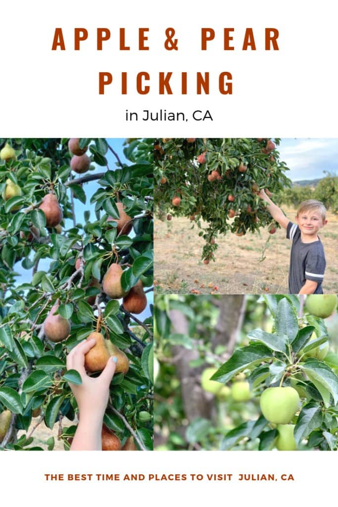 Apple and pear picking in Julian CA. Learn the best places to visit and the best time to visit the quaint mountain city of Julian.