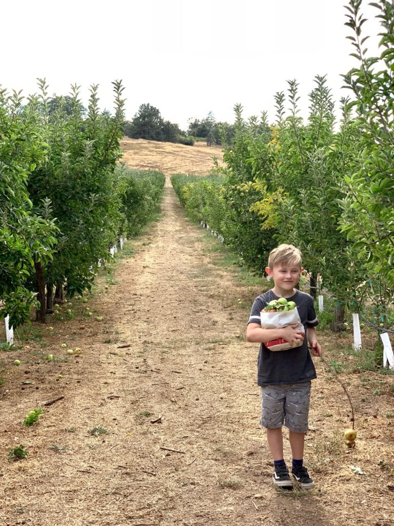 Julian apple picking at Volcan Valley Apple Farm
