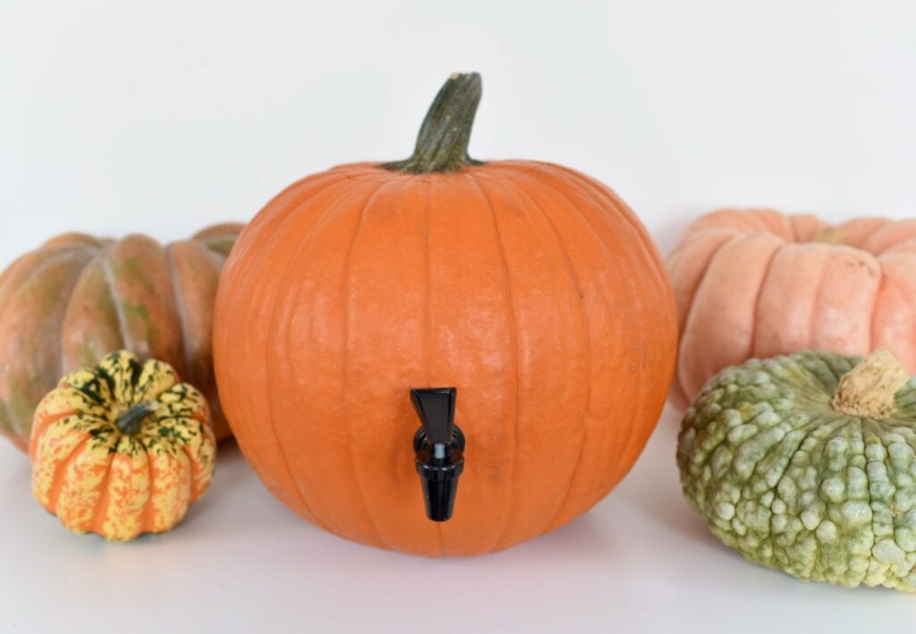 orange pumpkin drink dispenser with real pumpkins